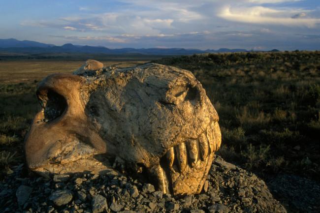 dinogorgon skull - National Geographic Creative