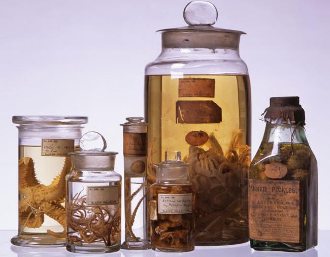 HMS Challenger Specimens in Bottles - Royal Albert Memorial Musuem
