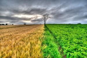 crop-line-300x199.jpg