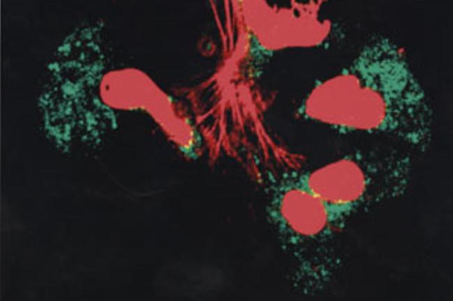 immunecells.jpg