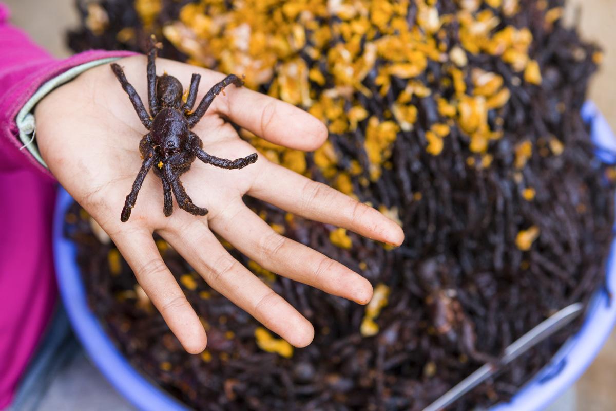 fried_tarantula-1.jpg