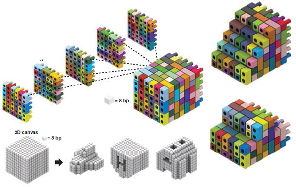 DNA-bricks.jpg
