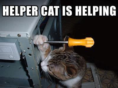 helpercat.jpg