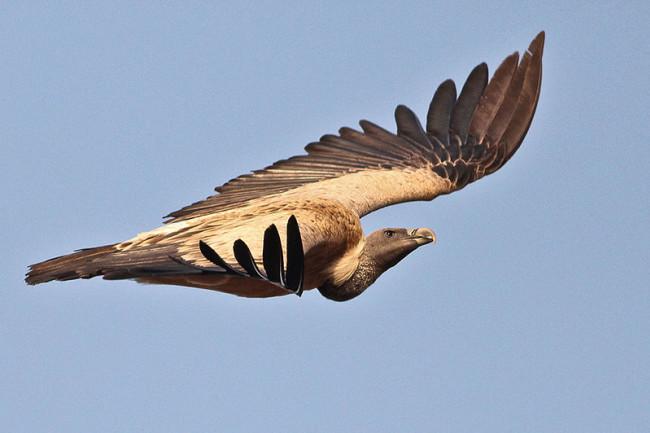 vultures.jpeg