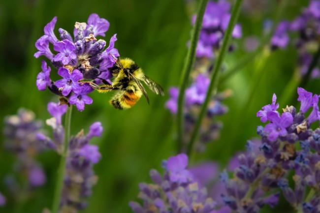 pollinators jenna lee unsplash