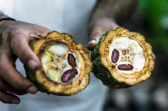 Raw Cocoa Beans - Shutterstock