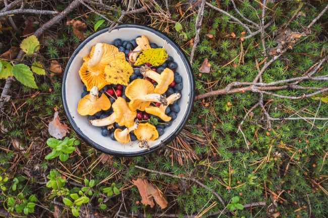 urban foraging mushrooms berries - shutterstock