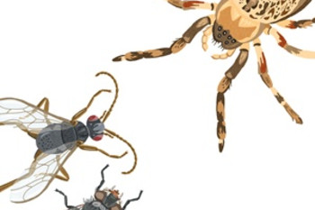 Social Spiders and Science Fraud