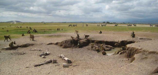 Baboons-Amboseli-National-Park-1024x489