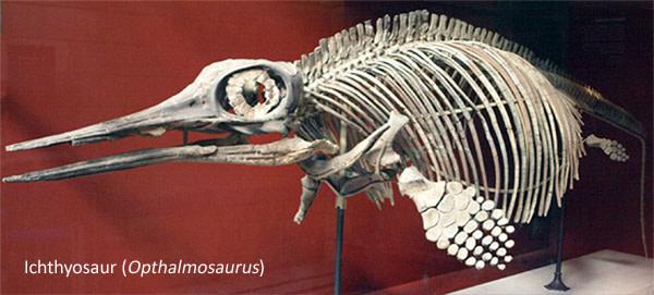 Ichthyosau.jpg