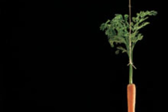 carrotweb.jpg
