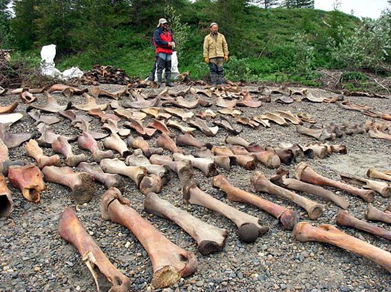 Mammoth Bones - J Archeological Sci