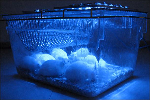 mice_optogenetics.jpg