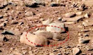 Mars-rat-300x179.jpg
