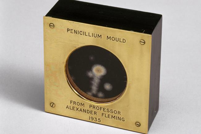 penicillin mold 1935 stock