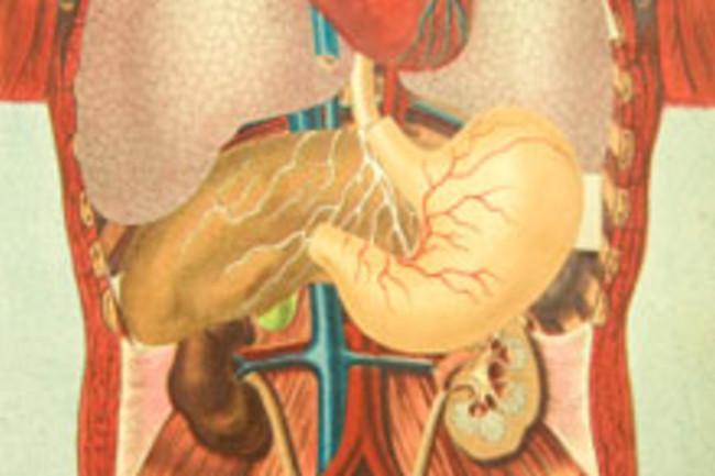 digestionweb.jpg
