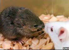 cloned-mice.jpg