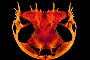 New 3D Images Reveal the Evolutionary Wonders Hidden in Frog Skulls