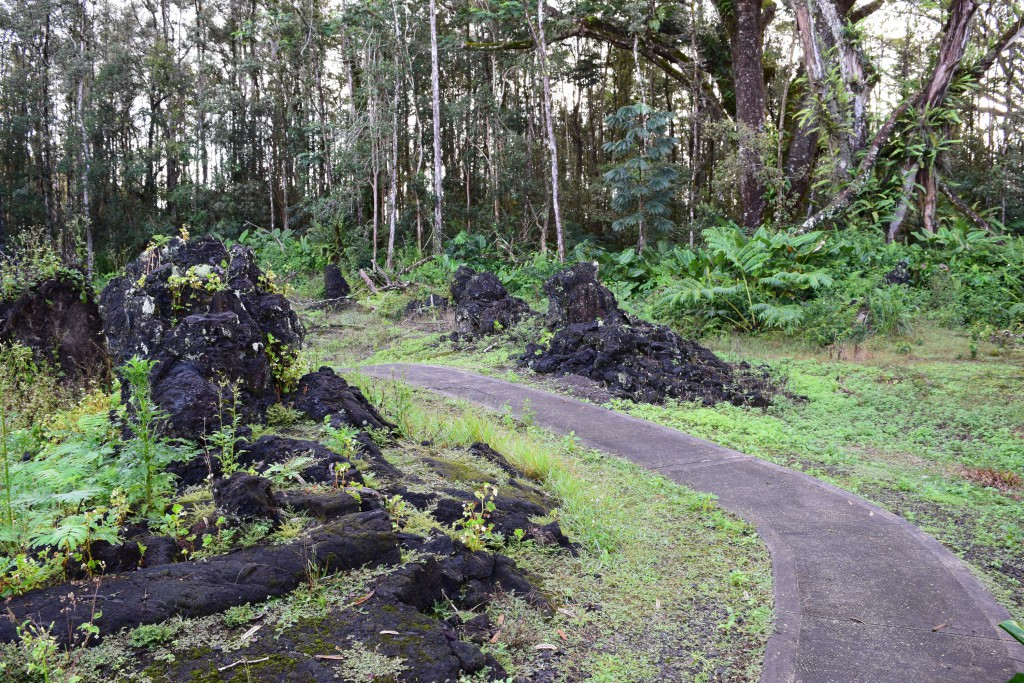 Lava trees on either side of the short, well-groomed trail at Lava Tree State Monument. Photo by Christie Wilcox