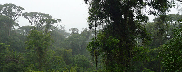 Costa_Rica_rainforest.jpg