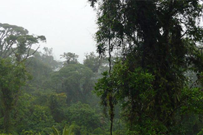 Costa_Rica_rainforest.jpg