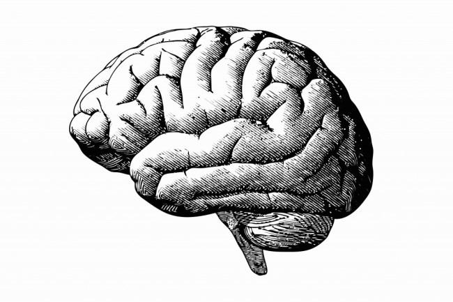 Brain - Shutterstock