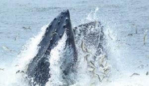 gotham-whale.jpg