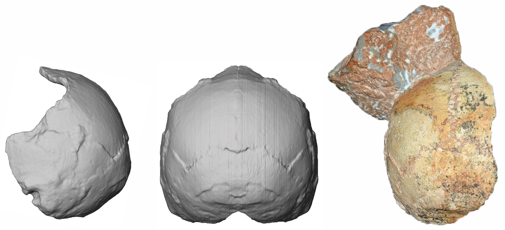 Scientists Find the Oldest Human Skull Outside of Africa