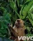 5ea93-baboon.jpg