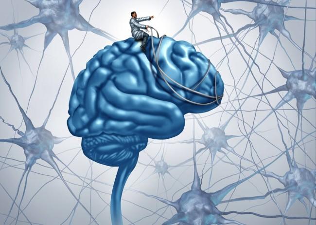 brain-harness.jpg