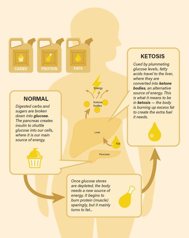 Ketosis Infographic - Discover