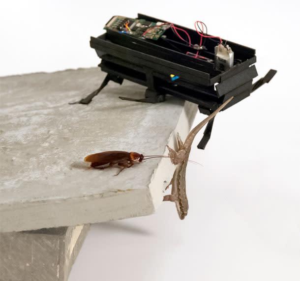 Cockroach_gecko_robot.jpg