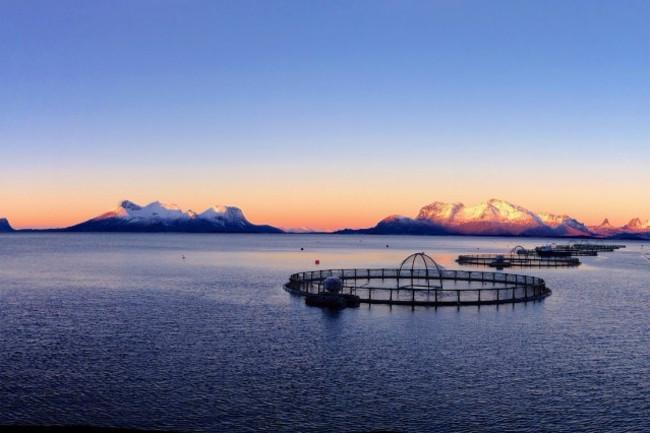 Steigen-Norway-Fish-Farm-1024x426.jpg