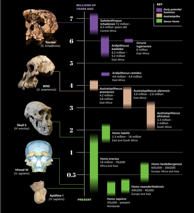 skullgraf (2)