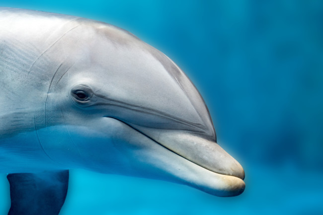 dolphin portrait detail of eye while looking at you from ocean - shutterstock 500829622