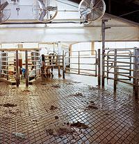 animals-milking.jpg