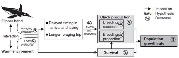 Penguin_schematic.jpg