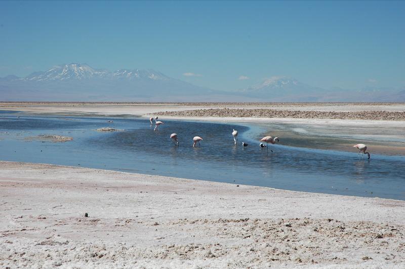 Salar_de_Atacama_Pular.jpg