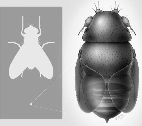 Smallest-fly.jpg
