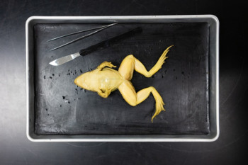 High School Dissections Are a Science Class Tradition. But Are They Doing More Harm Than Good?