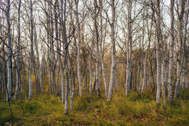forest-1081364_1920-1024x683.jpg