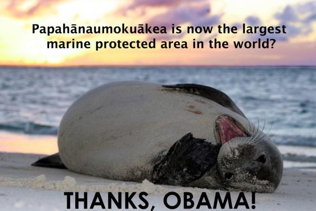 hawaiianmonkseal_sunset_marksullivan-copy-1024x683.jpg
