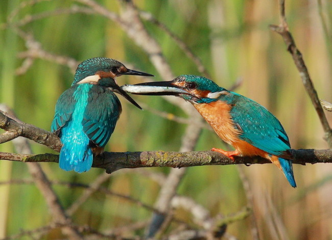 birds-feeding.jpeg