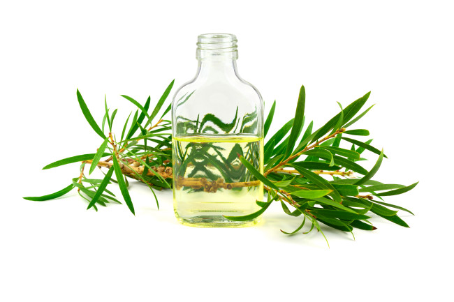Tea Tree Essential Oil - Shutterstock