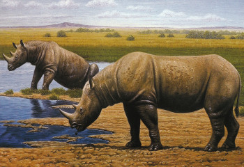 A 1.7-Million-Year-Old Rhino Tooth Revises Their Family Tree
