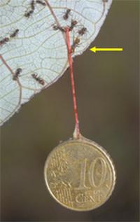 Ant_coin.jpg
