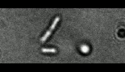 walking-bacteria.jpg