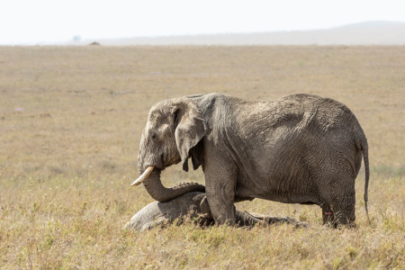 Are Animals Capable of Grief?