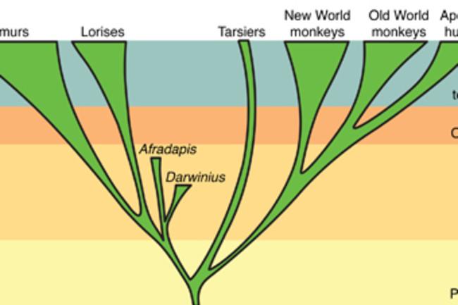 primate-tree.jpg