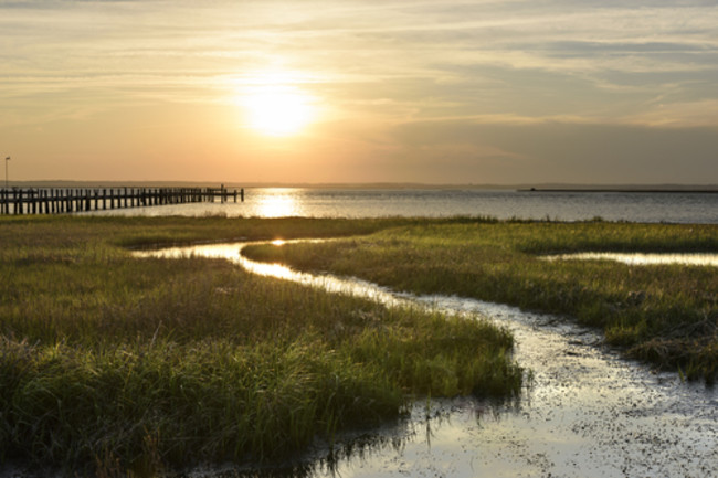 Salt Marsh - Shutterstock